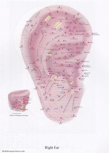 auricular acupuncture points right ear