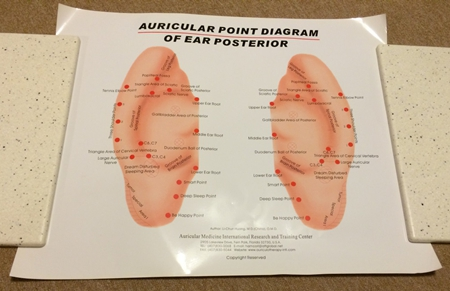 Auricular Ear Color Poster Ear Posterior