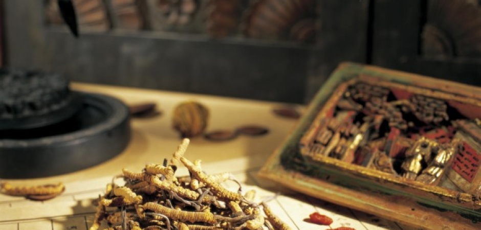 traditional Chinese herb medicine Cordyceps Link